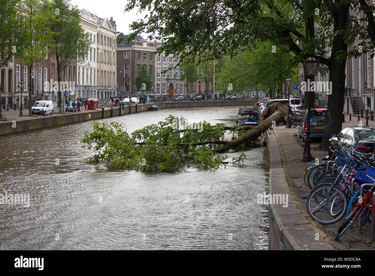 Amsterdam, Holland - June 09, 2019: Blown down tree in the canal after a heavy storm Stock Photo