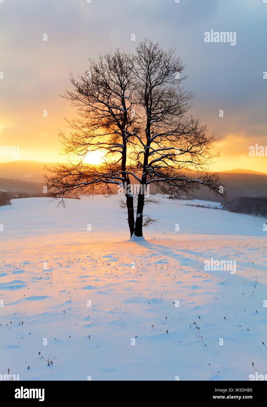 Alone tree in winter sunrise landscape - nature Stock Photo