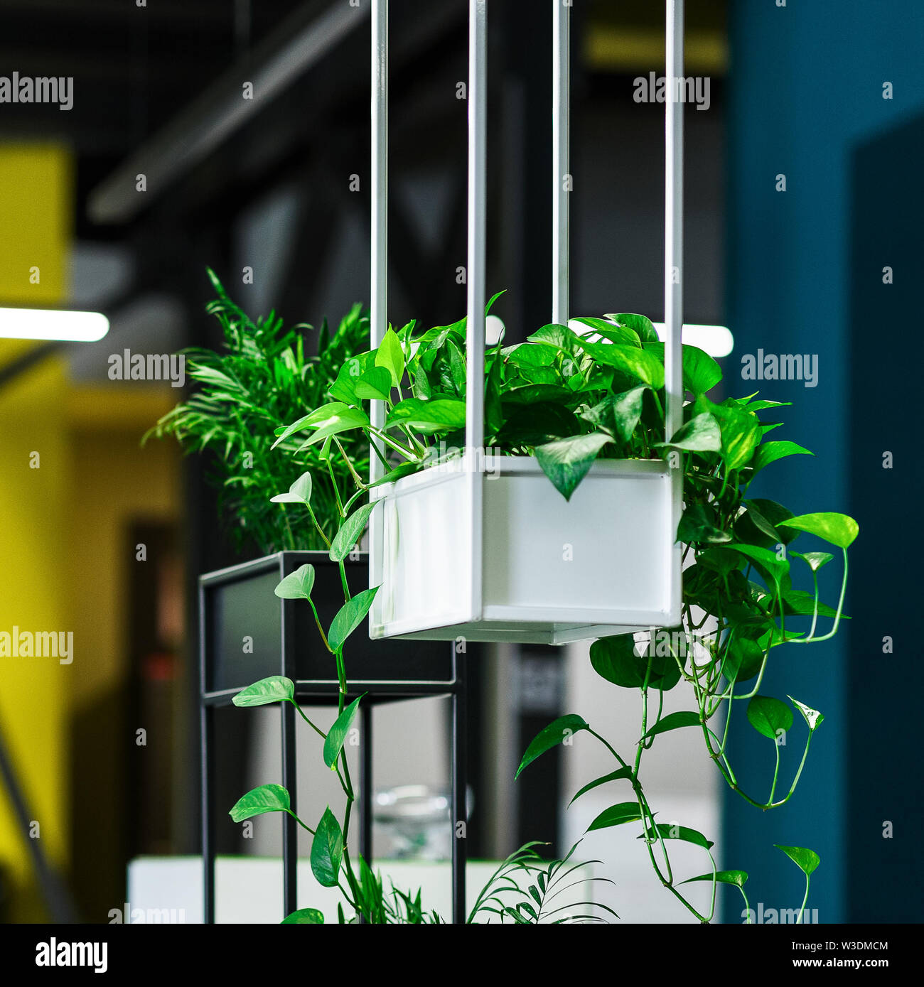 Green Plants In Modern Office Interior On Blurred Background Stock