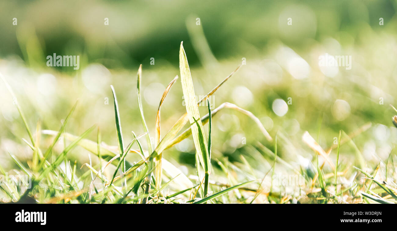Grass closeup with fine water drops spraying down and creating a beautiful light effect background, shallow focus - Stock Image