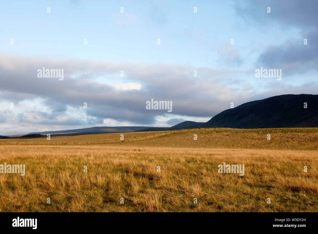 Cronkley Pasture, Upper Teesdale, County Durham, England, UK - Stock Image