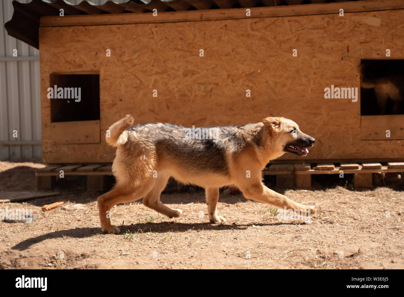 Photo side of ginger dog near wooden booth in yard on summer - Stock Image
