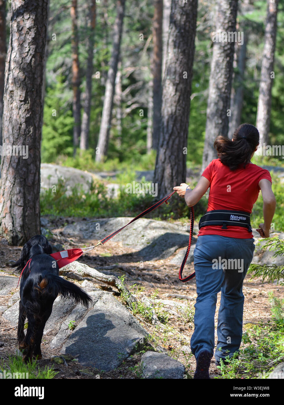 Woman walking in the forest with a Gordon Setter Stock Photo