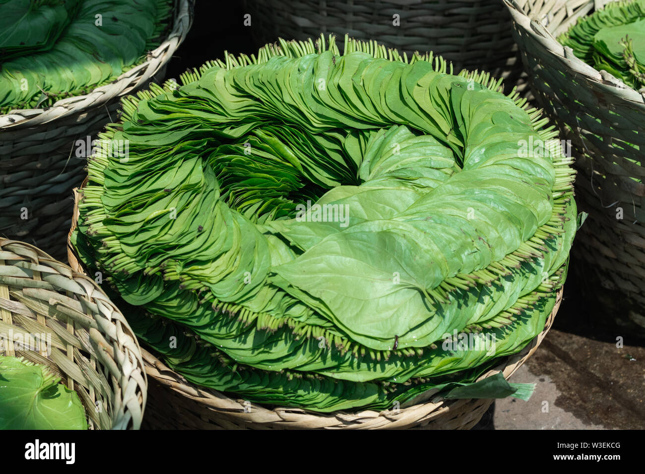 Betel green leaves packed in a basket for sale at Yangon street market, Myanmar - Stock Image