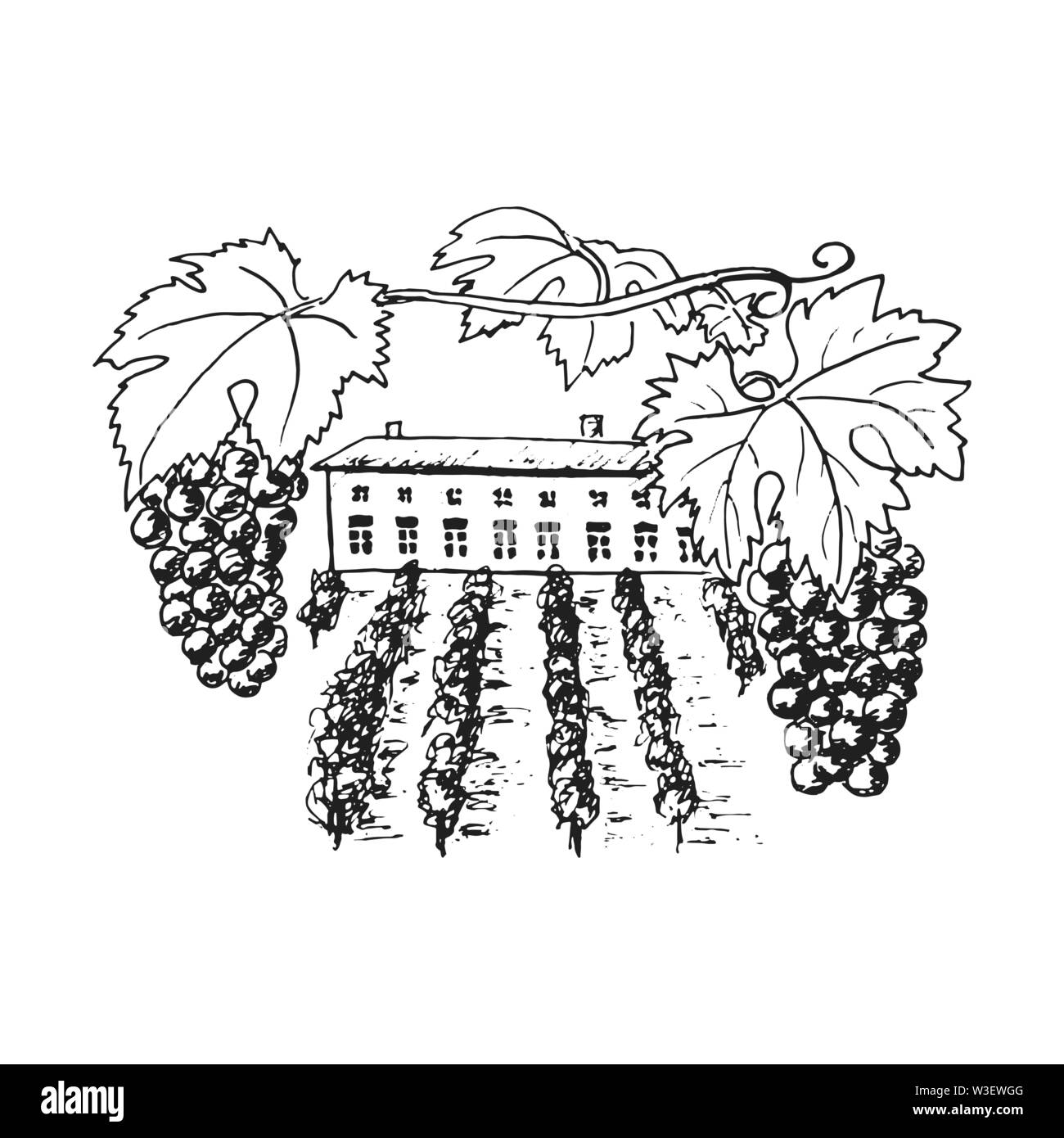 Wine plantation, grapes hills, trees, house, winery on the horizon vector illustration. Hand drawn grapewine, folliage. Ink pen vintage sketch. For pr - Stock Image