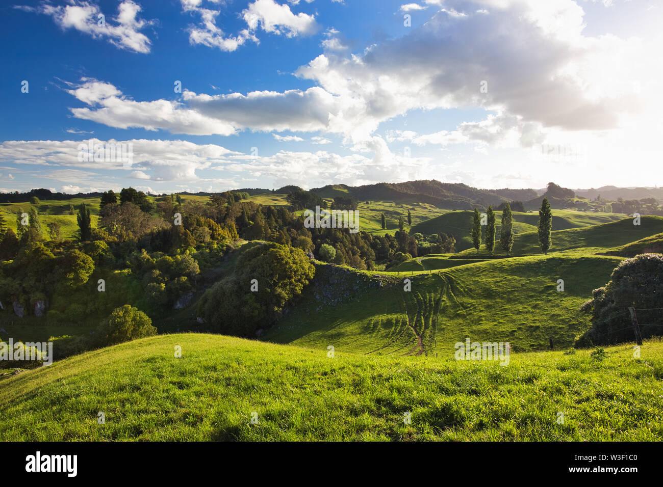 New Zealand Countryside Scenery, Waitomo Area - Stock Image