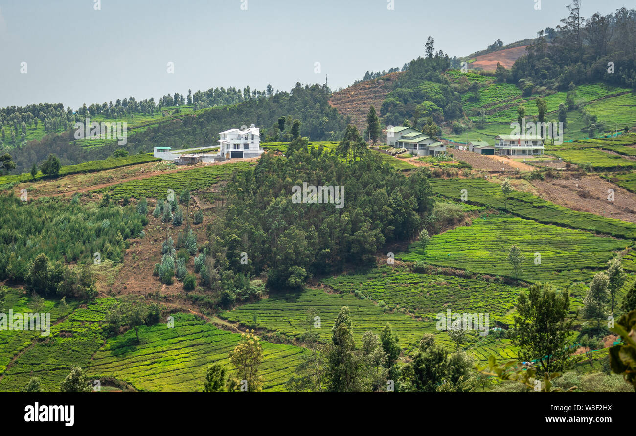 Tea gardens in the foothills of western ghat image take at India. The landscape is amazing with Green tea plantations in rows. - Stock Image