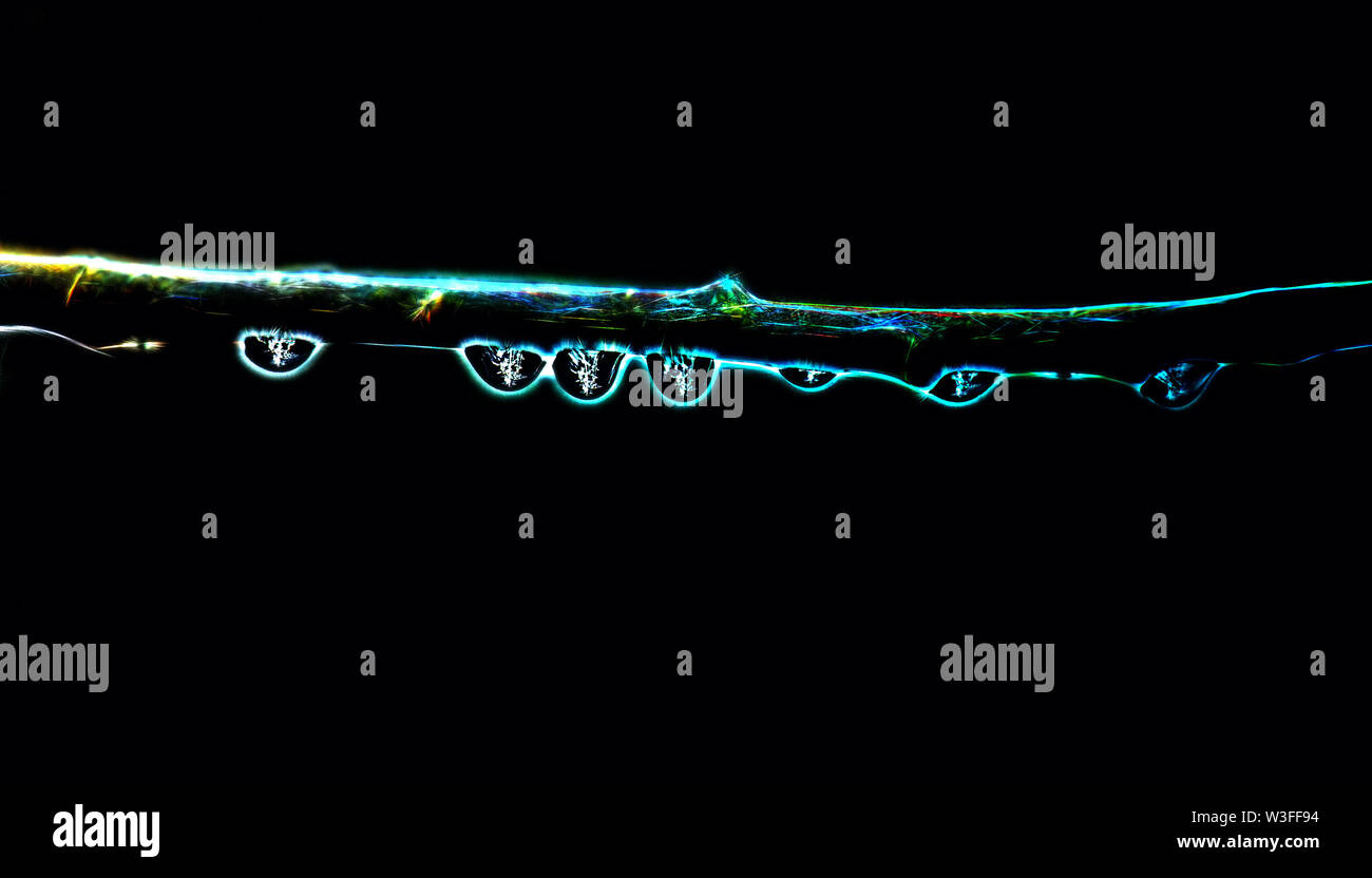 bioenergy of a neon tree on a black background. Glowing tree branch in dark - Stock Image