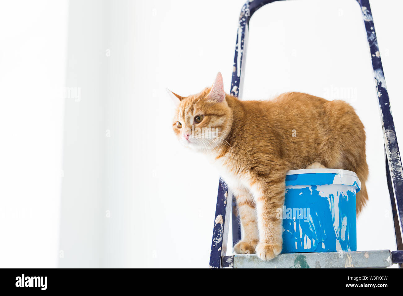 Repair, painting the walls, the cat sits on the stepladder. Funny picture. - Stock Image