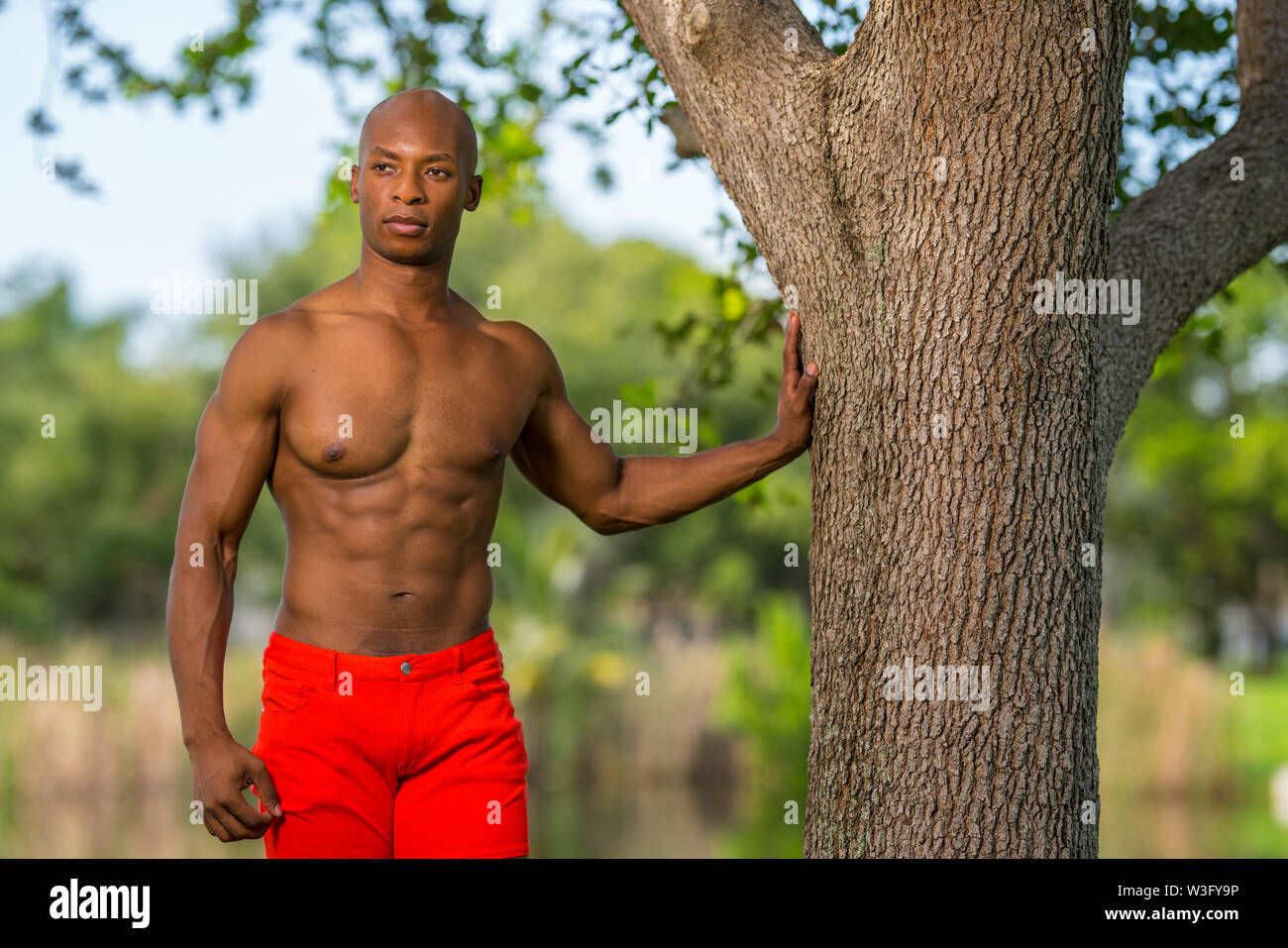 Photo of an attractive model posing with hand on tree in the park. Image lit with off camera flash softbox - Stock Image