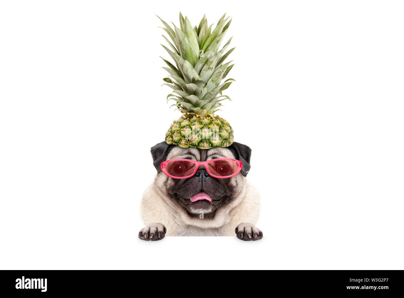 portrait of cute funny frolic summer pug puppy dog with sunglasses and pineapple hat, hanging with paws on blank white banner, isolated Stock Photo