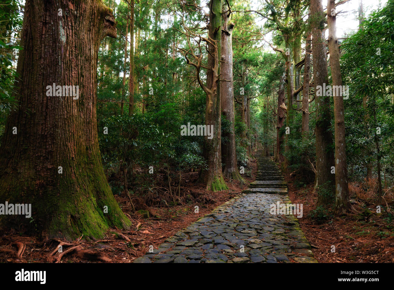 Famous Daimonzaka trail inside giant cypress forest, leading to Nachi falls, Japan Stock Photo