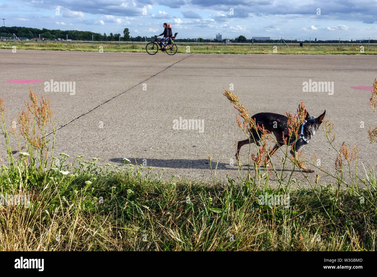 Dog on Berlin Tempelhof field Germany - Stock Image