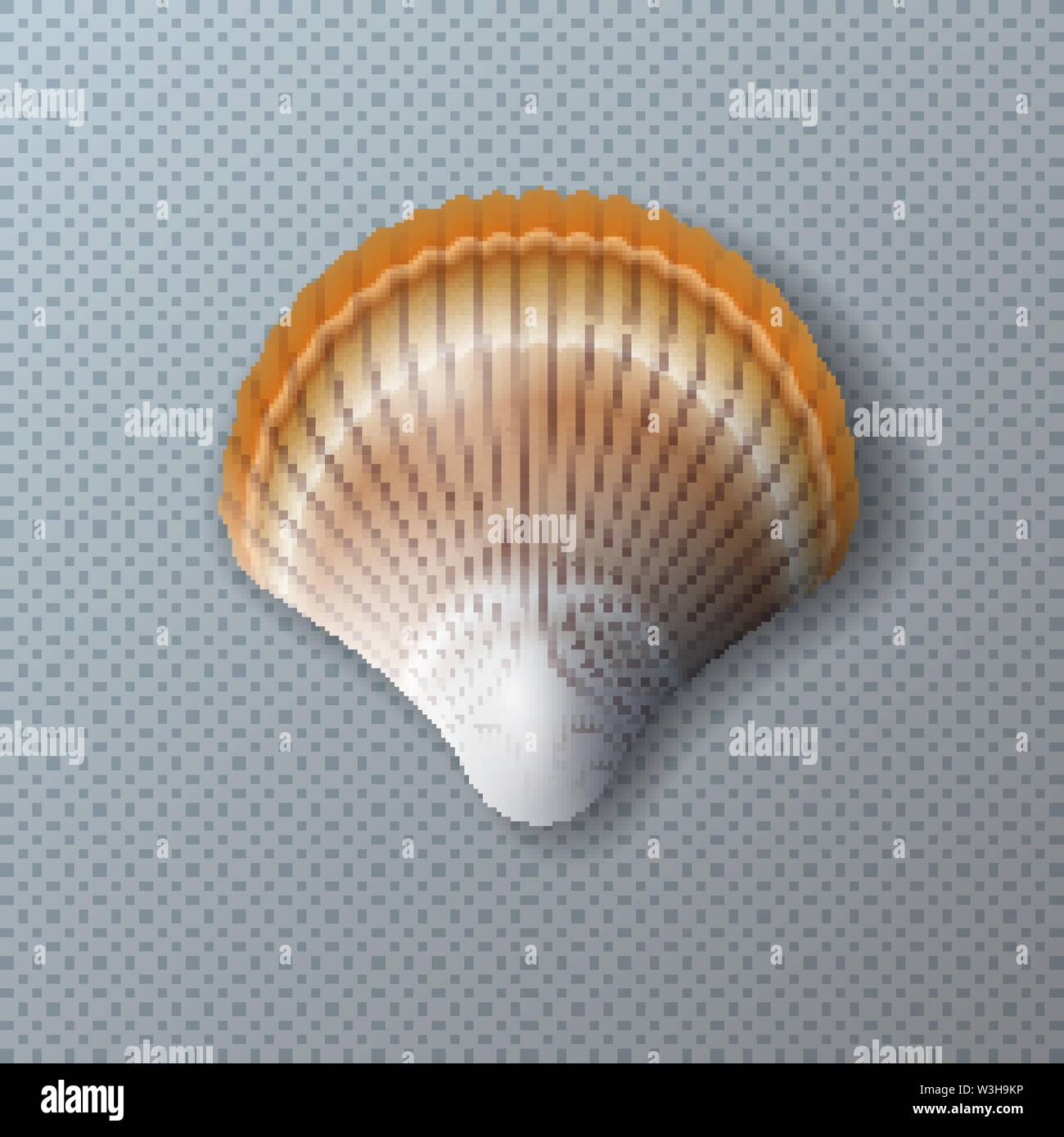 Vector Illustration with Beautiful Shell Isolated on Transparent Background. Vector Nature Sea Design Elemets with Realistic Marine Mollusk Seashell Stock Vector