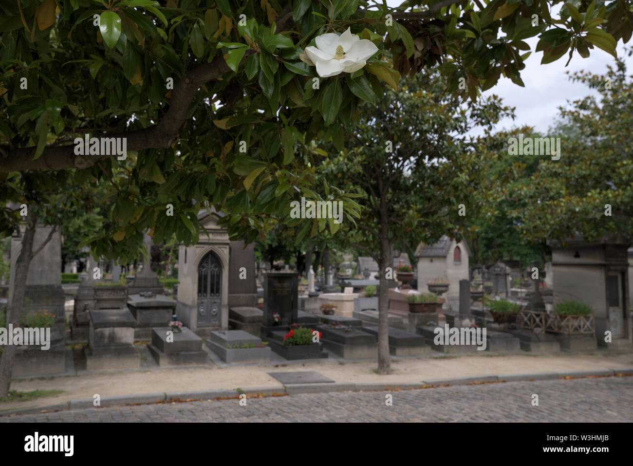 white blossom at the Pere Lachaise Cemetery, Paris, France - Stock Image
