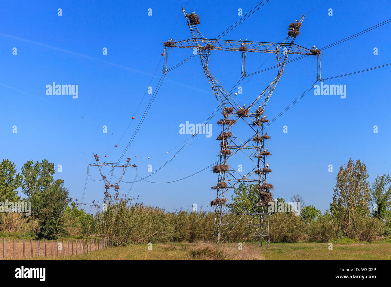 White stork nests on electricity pylons Stock Photo