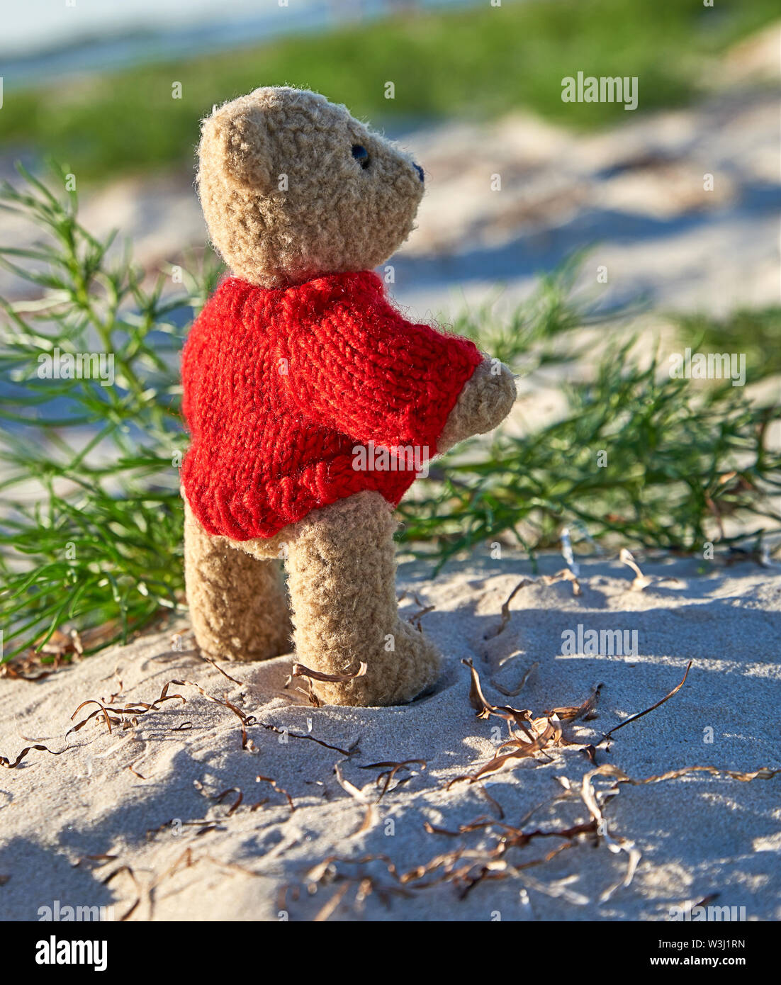 brown teddy bear in a red sweater stands on the sandy seashore and looks into the distance, concept of loneliness - Stock Image