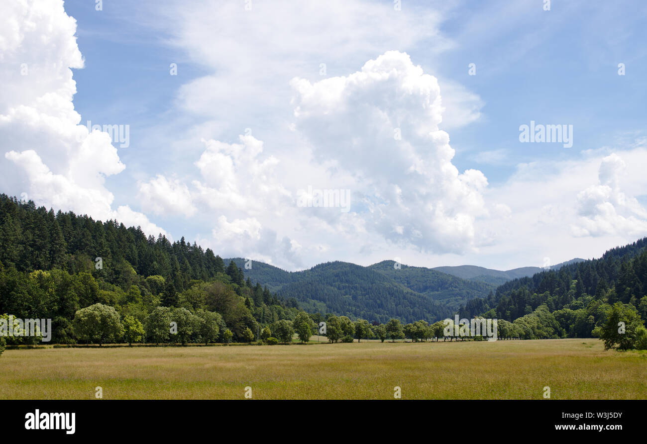 Landscape shot of the green hills of the black forest, germany, with a field in the foreground - Stock Image
