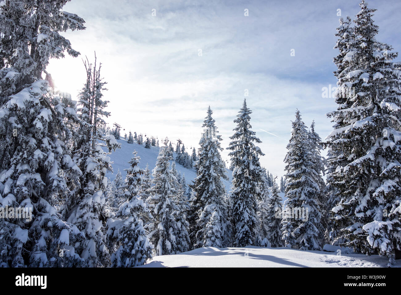 Snow covered trees in a ski area - Stock Image