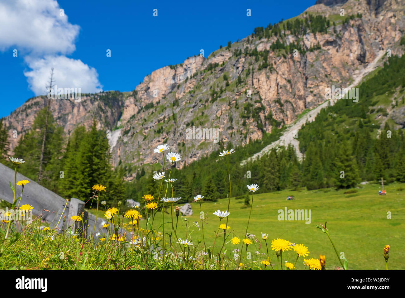 Flowering meadow flowers in an alp valley - Stock Image