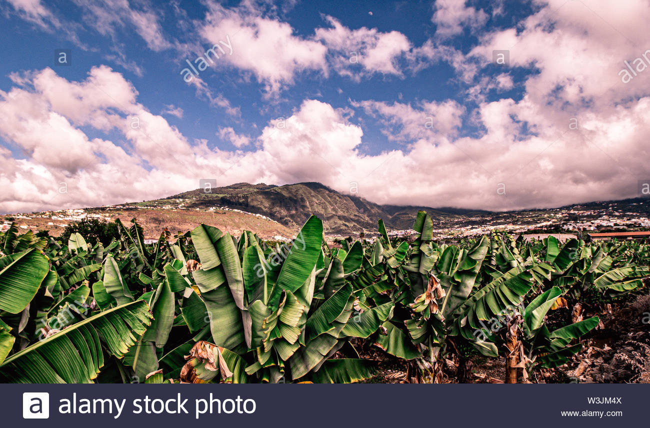 fantastic view of the Orotava valley in tenerife - Stock Image