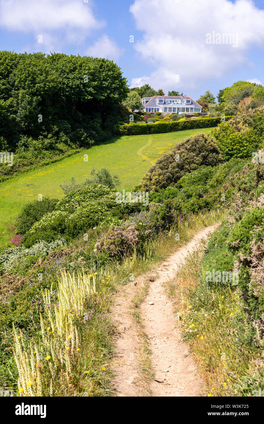 The beautiful rugged south coast of Guernsey, Channel Islands UK - Wild flowers beside the coastal footpath leading to Petit Bot Bay - Stock Image