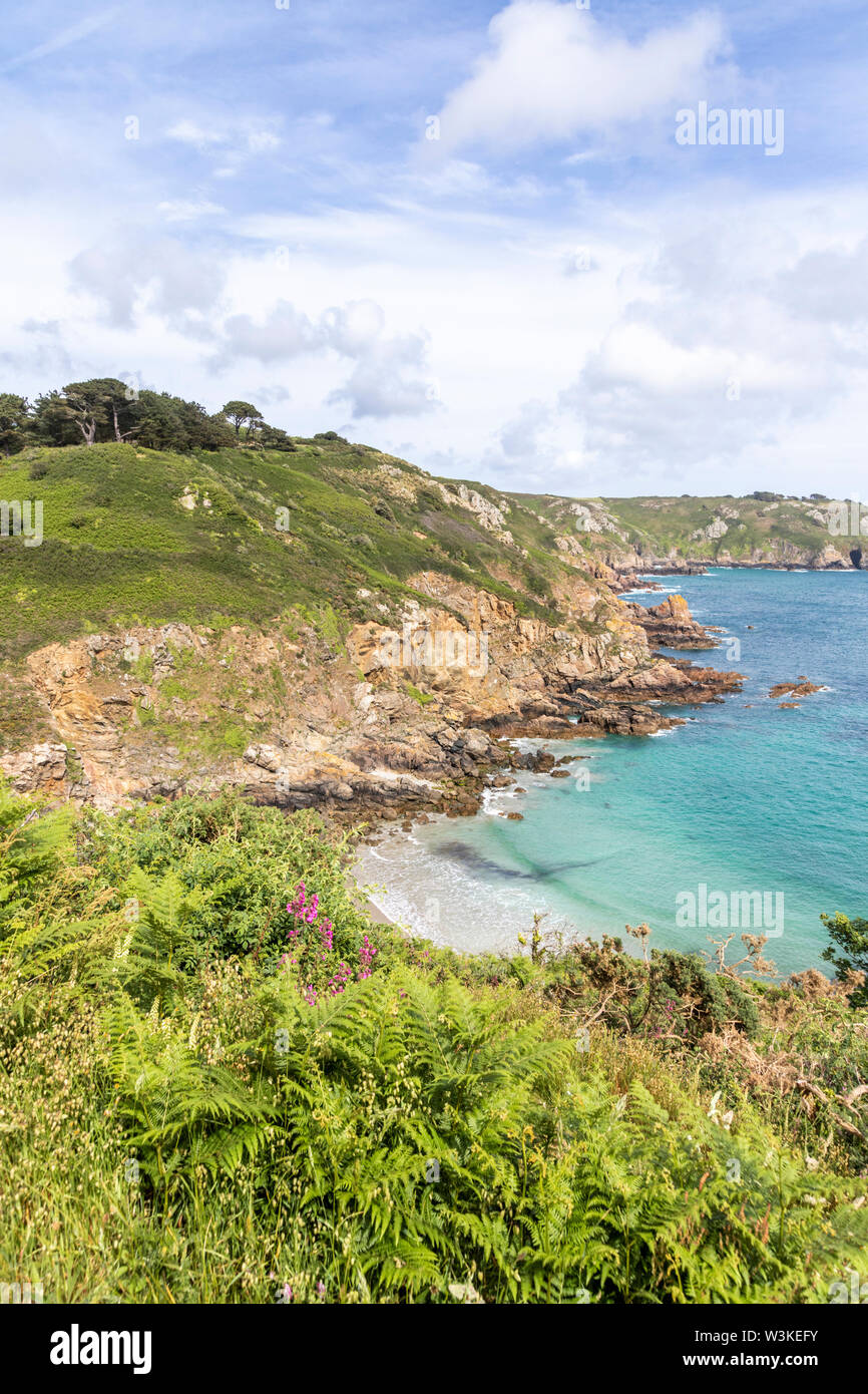 Wild flowers and ferns beside the coastal path on the cliffs above Petit Bot Bay on the beautiful rugged south coast of Guernsey, Channel Islands UK Stock Photo