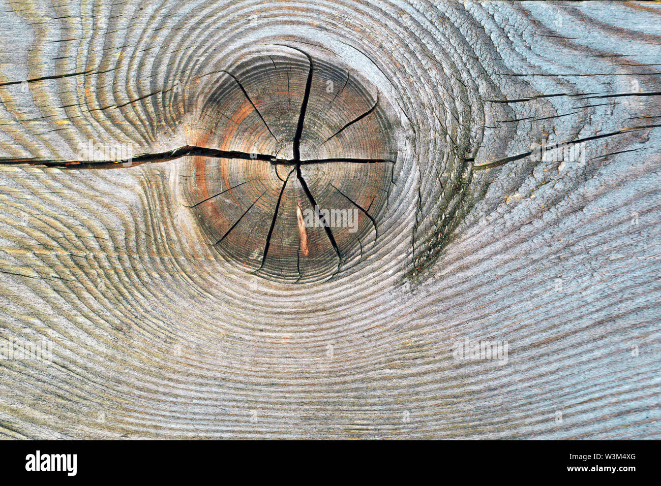 The texture of the slice of the old rotten stump with cracks and annual rings. Stock Photo