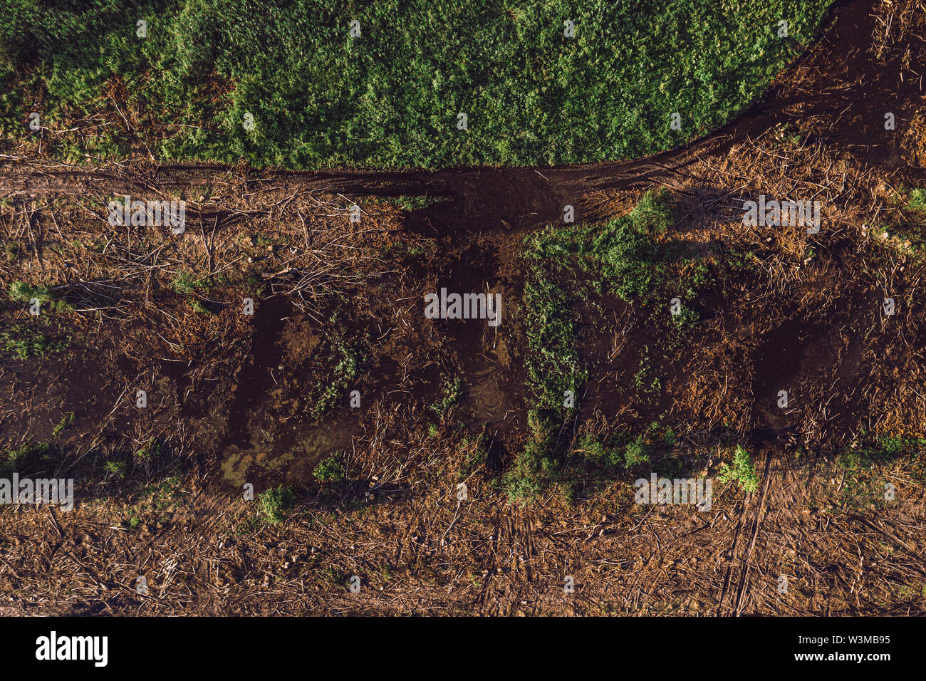 Aerial view of deforested landscape from drone pov, bare ground surface with chopped trees and branches, top view - Stock Image