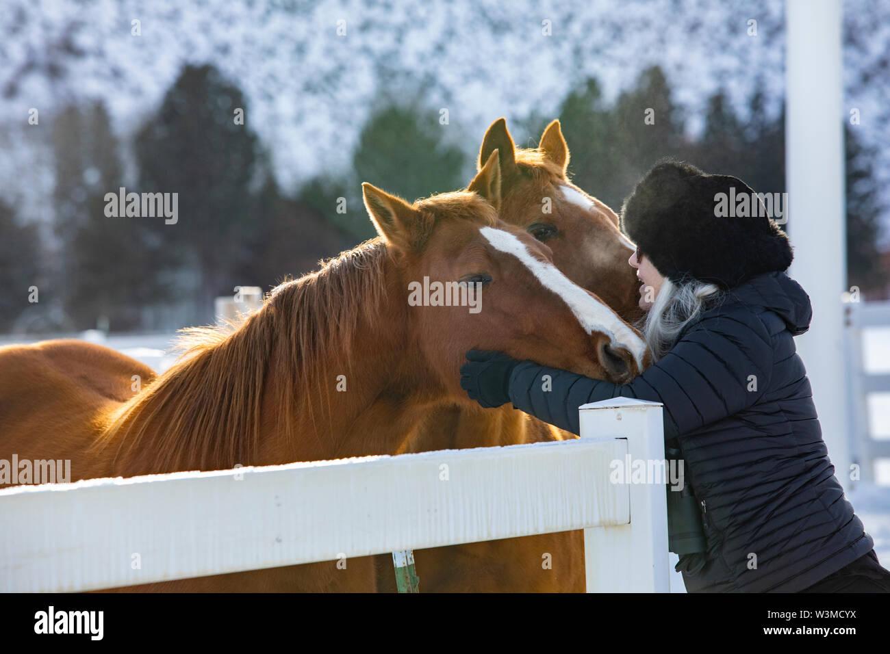 Woman wearing fur hat stroking horses - Stock Image