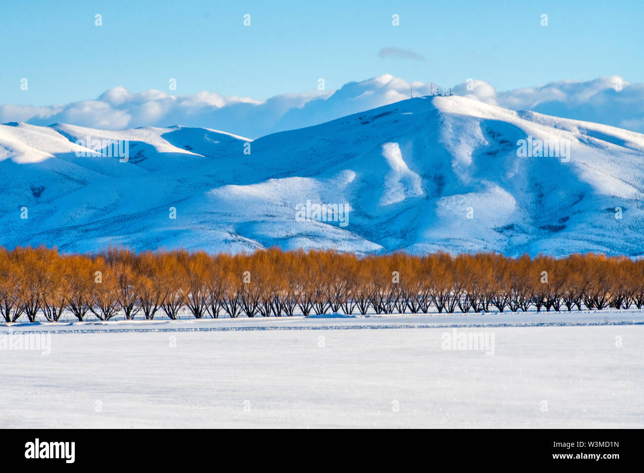 Autumn trees by snow covered mountain in Bellevue, Idaho, USA - Stock Image