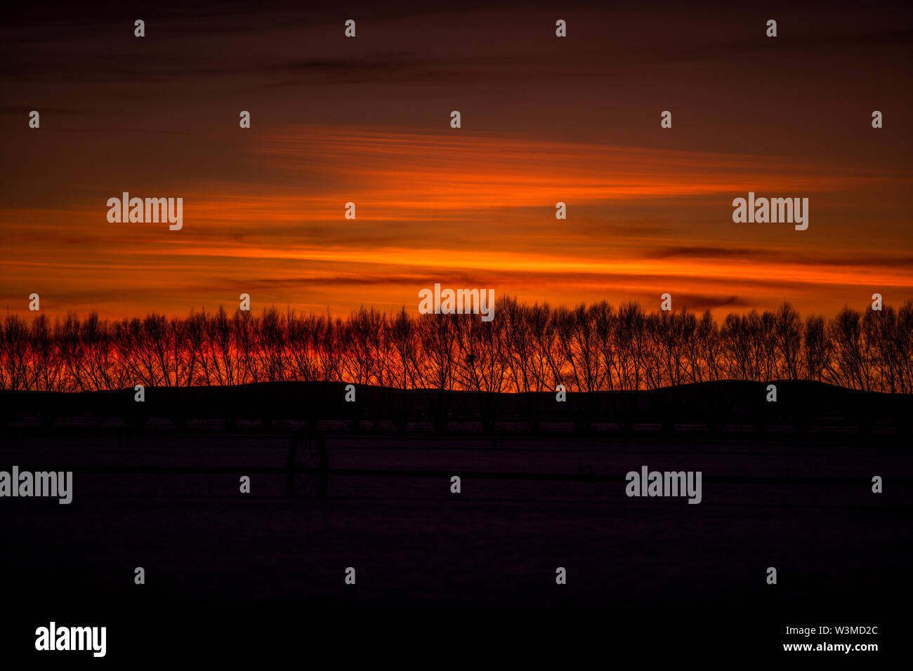 Silhouettes of bare trees at sunset in Bellevue, Idaho, USA - Stock Image