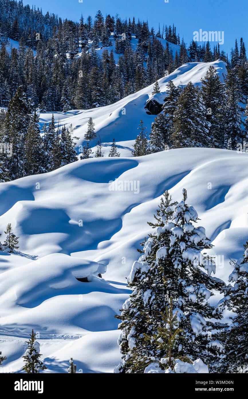 Pine trees in snow on mountain in Sun Valley, Idaho, USA - Stock Image