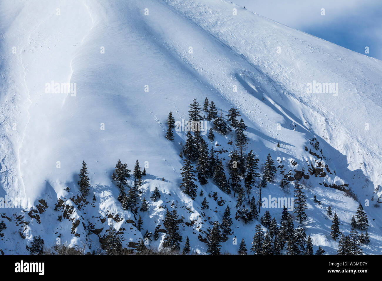Pine trees on snow covered mountain in Sun Valley, Idaho, USA - Stock Image