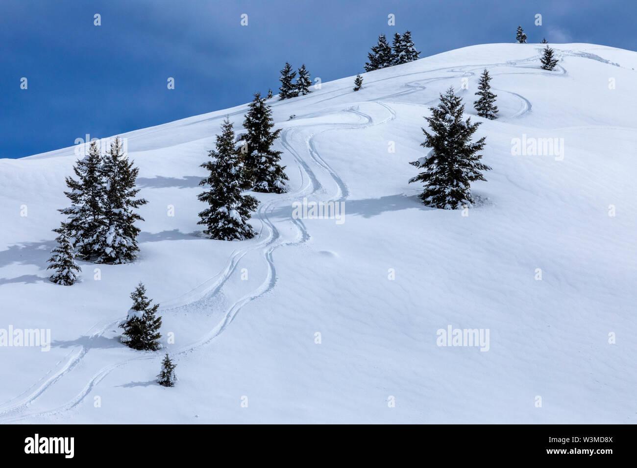 Ski tracks by pine trees on mountain in Sun Valley, Idaho, USA - Stock Image