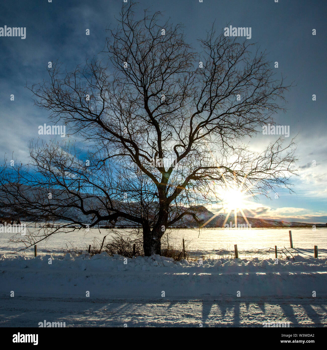 tree by snow field at sunrise in Picabo, Idaho - Stock Image