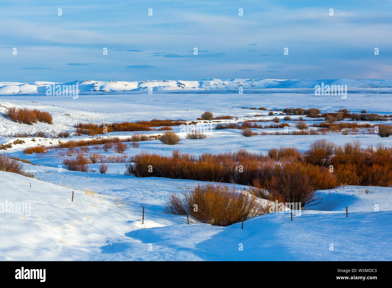 Bushes in snow field during winter in Fairfield, Idaho - Stock Image