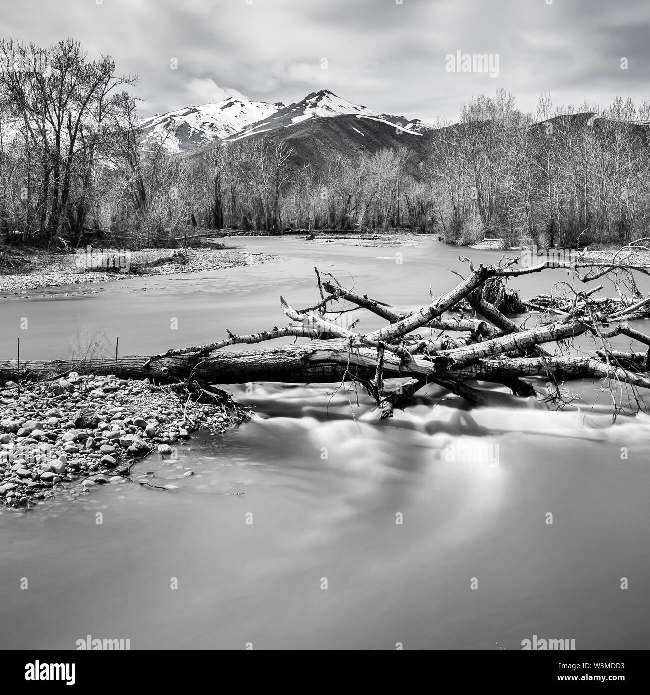 Bare branches in river in Bellevue, Idaho, USA - Stock Image