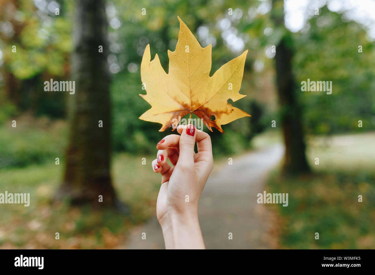 Hand of woman holding yellow leaf - Stock Image