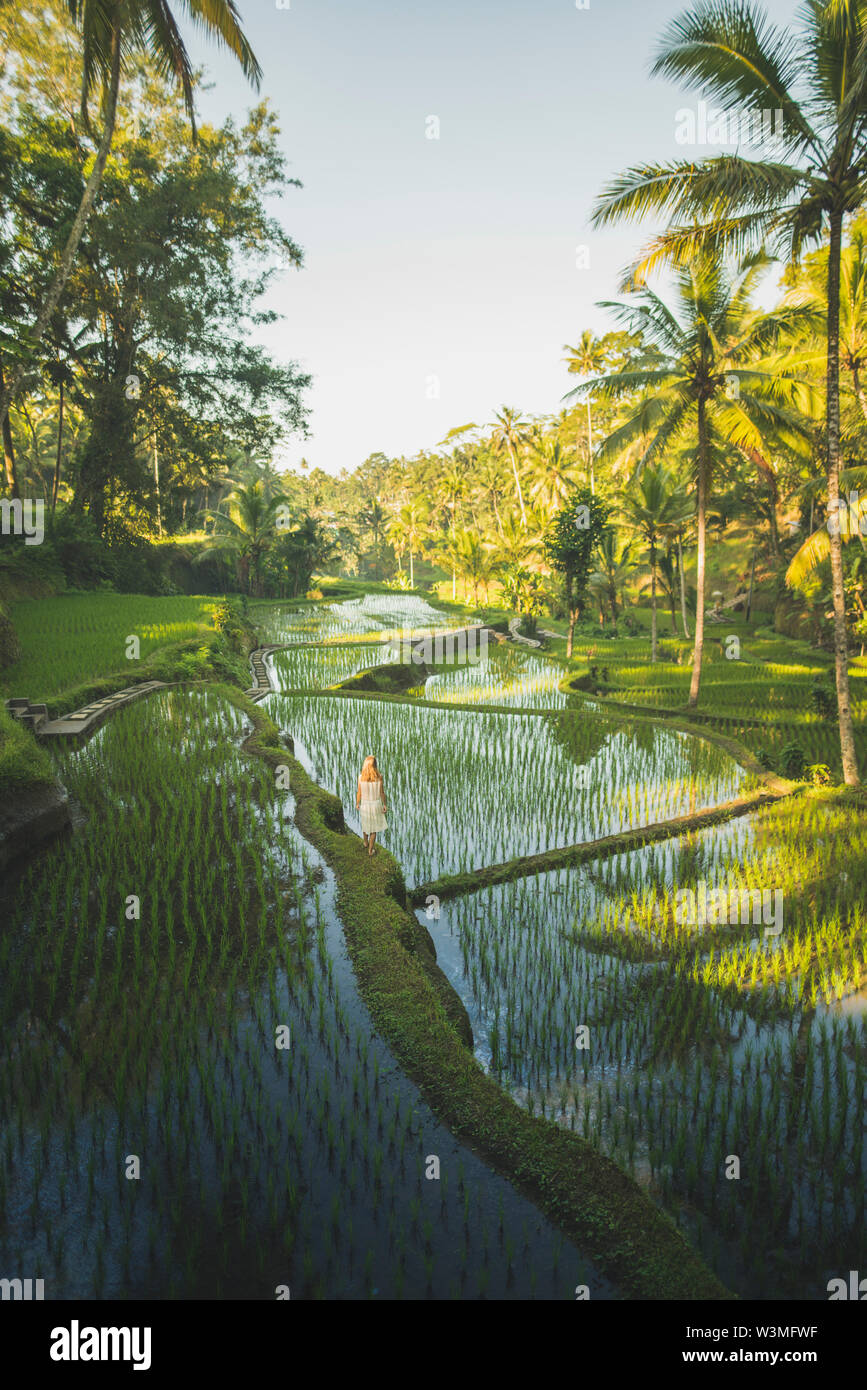 Woman on terraced rice paddies in Bali, Indonesia - Stock Image