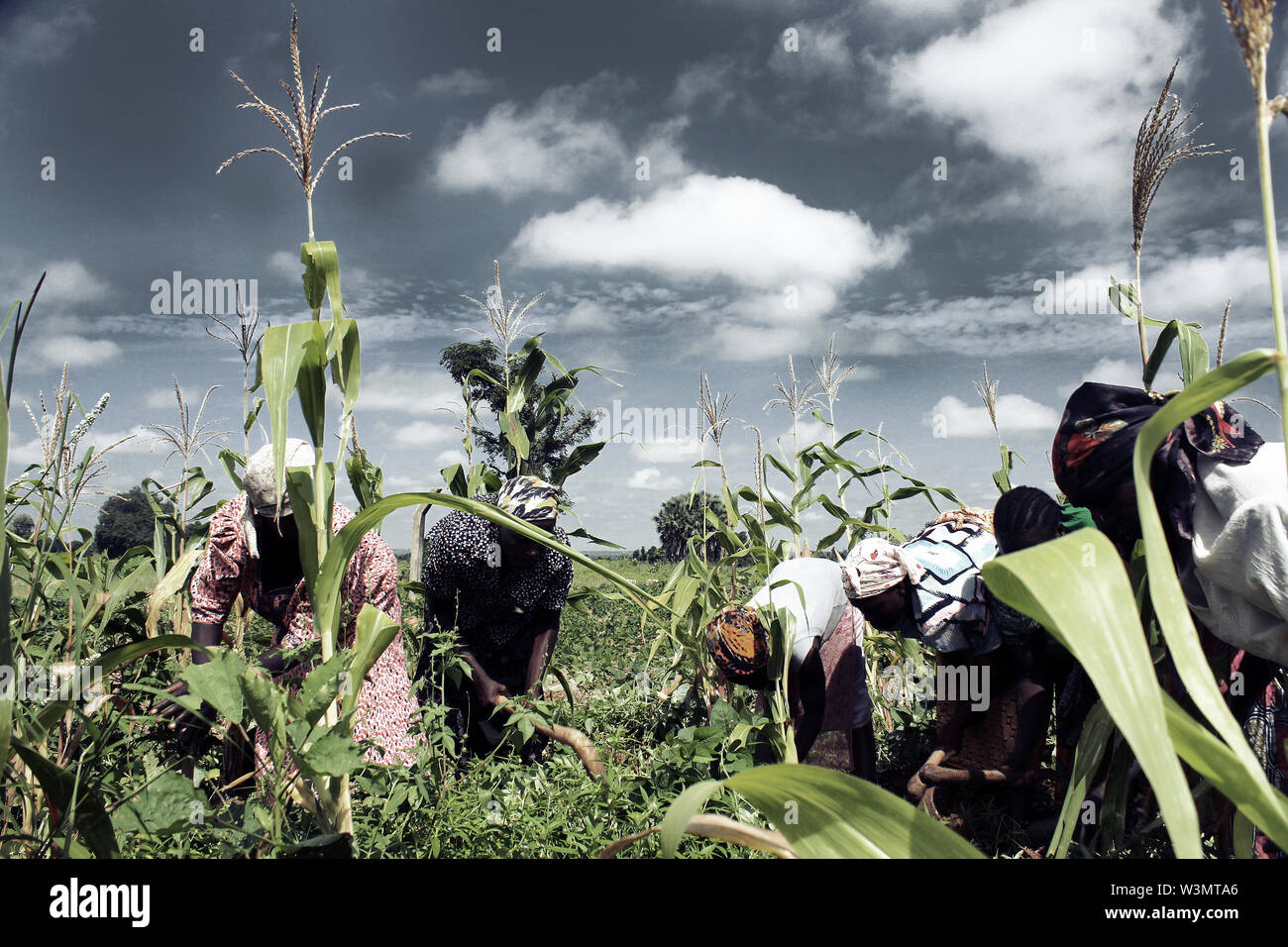 Displaced women, some of whom are widows, on a farm - Stock Image