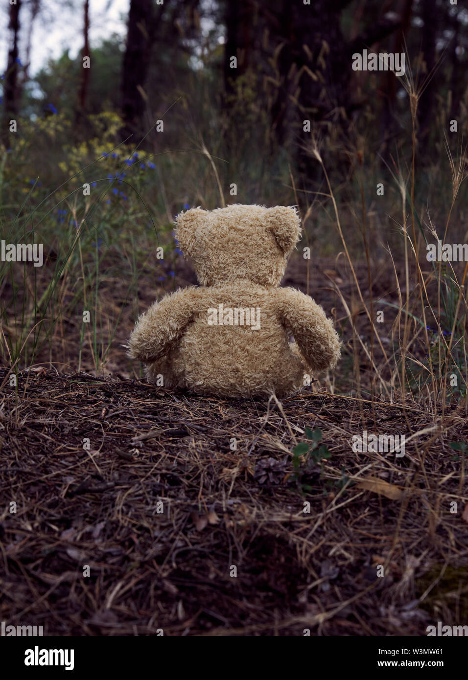 brown teddy bear sits back in the middle of a sandy road in the forest,  concept of loneliness and forgetting - Stock Image