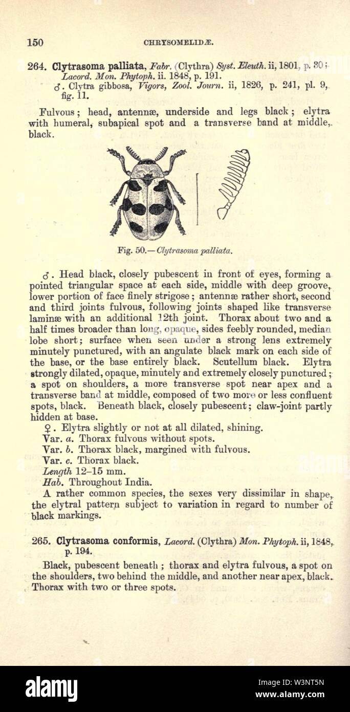 Coleoptera (Page 150) - Stock Image