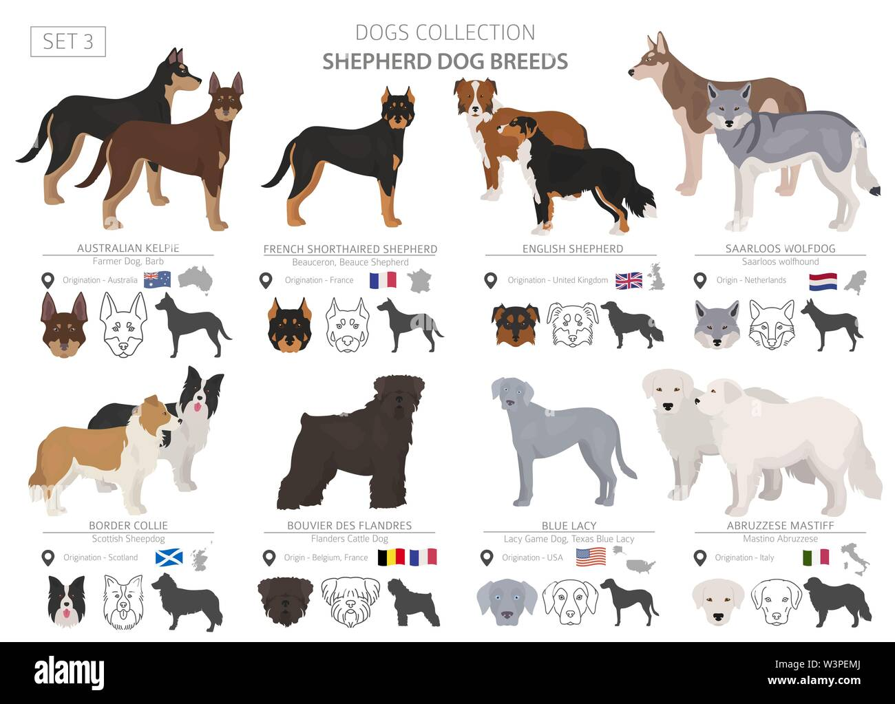 Shepherd and herding dogs collection isolated on white. Flat style. Different color and country of origin. Vector illustration Stock Vector