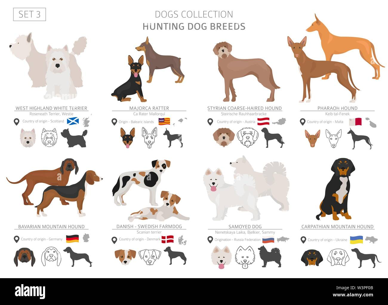 Hunting dogs collection isolated on white. Flat style. Different color and country of origin. Vector illustration - Stock Image