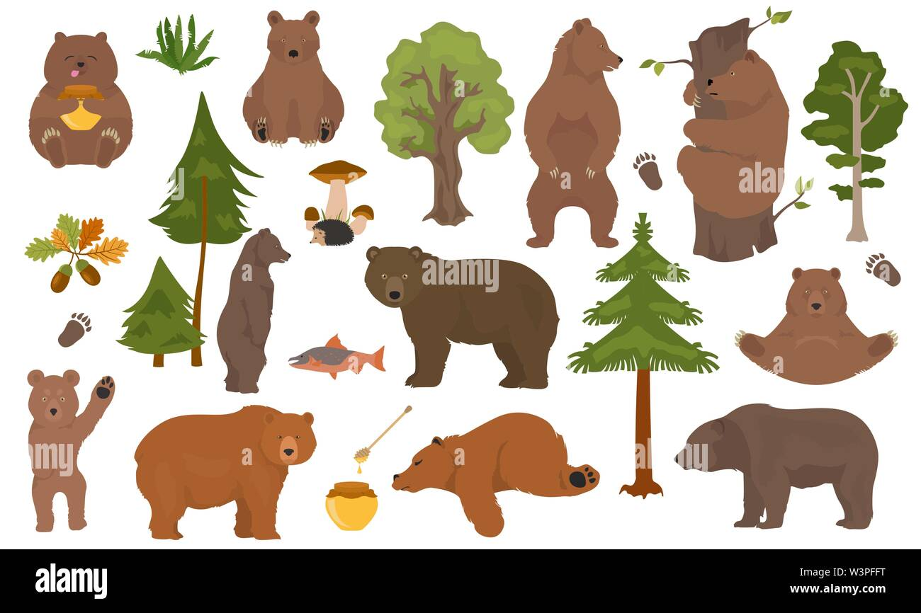 All bear species in one set. Bears in forest collection. Vector illustration - Stock Image