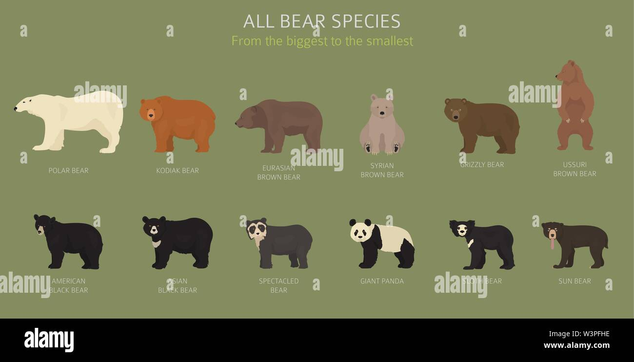 All world bear species in one set. Bears collection. Vector illustration Stock Vector