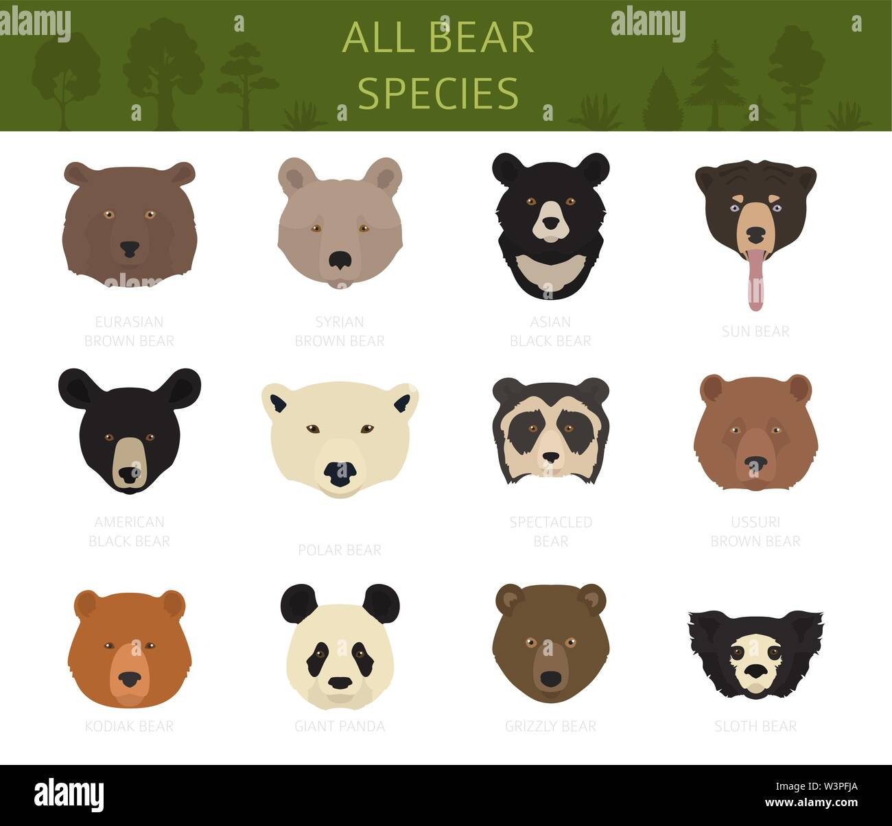 All world bear species in one set. Bears collection. Vector illustration - Stock Image