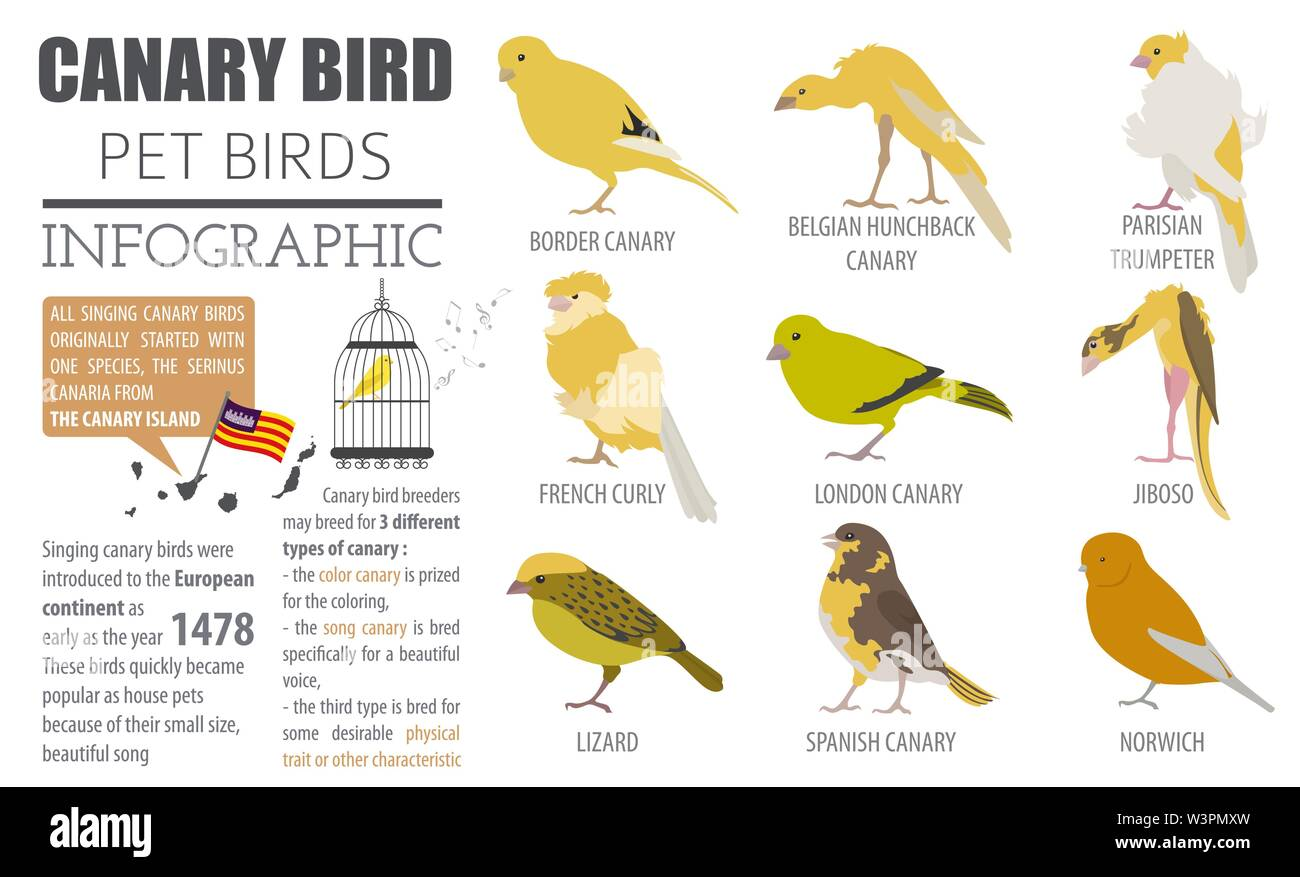 Canary Breeds Icon Set Flat Style Isolated On White Pet Birds Collection Create Own Infographic About Pets Vector Illustration Stock Vector Image Art Alamy