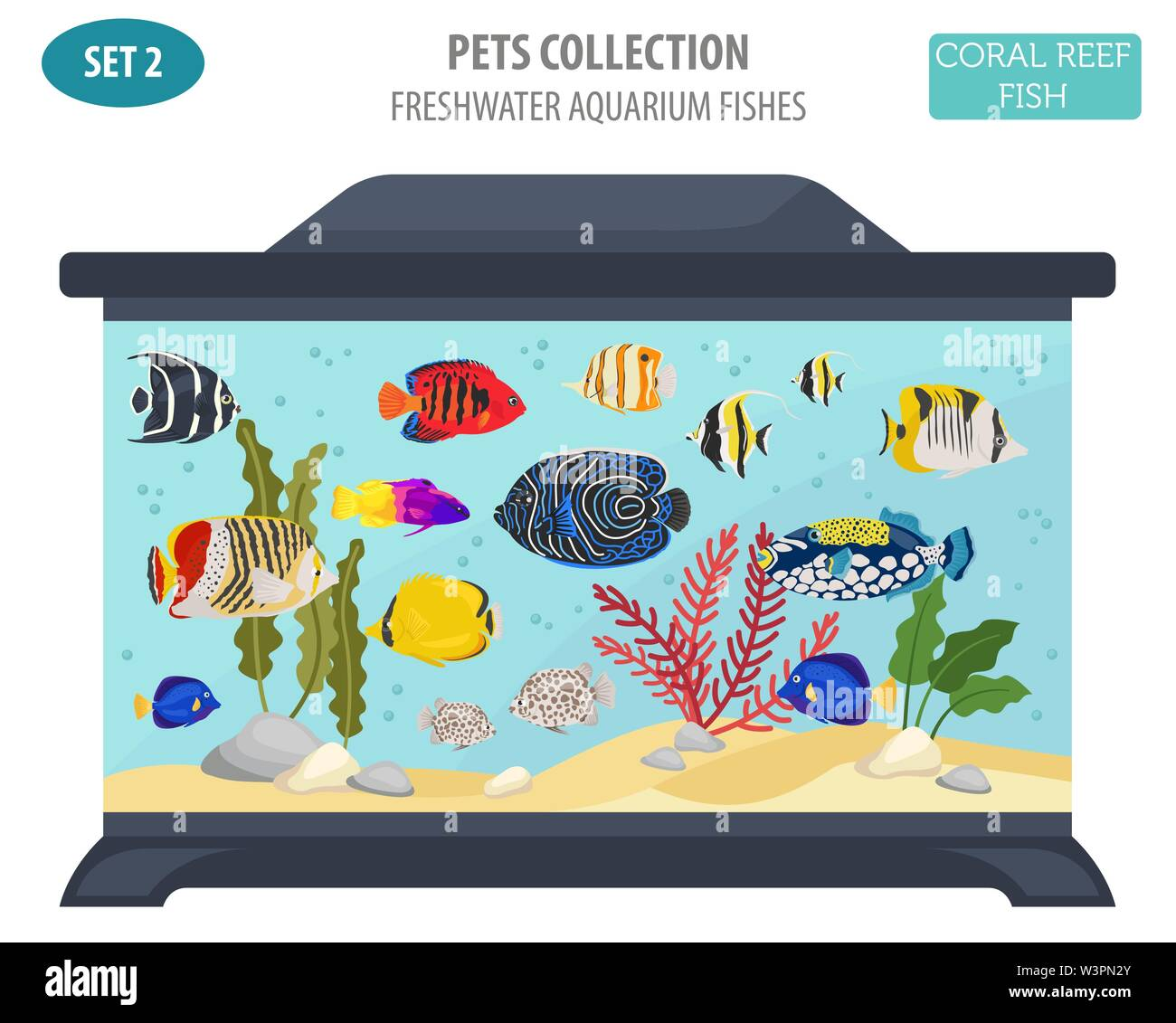 Freshwater aquarium fish breeds icon set flat style isolated on white. Coral reef. Create own infographic about pet. Vector illustration - Stock Image